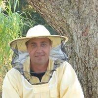 Bienen Baumann Ludwigsfelde Mario Baumann
