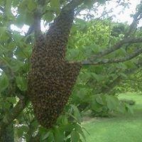 Spring Hollow Honey Farm