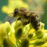 Hetlinger Honig-Manufaktur