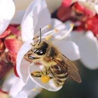 Imkerei KREUTTAL-Bees