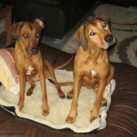 Hunde-Futter-und-mehr