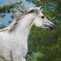Hidden Acres Arabians, LLC