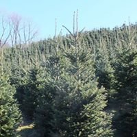 High Mountain Pines