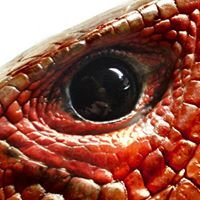 Quality Reptiles