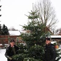 Weihnachtsbaum Holstein Kg