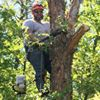Hollister Tree Service