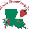 Ponchatoula Strawberry Festival Inc