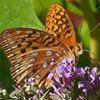 New Jersey Audubon's Scherman Hoffman Wildlife Sanctuary