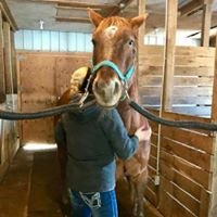 Equihands Horse Massage Therapy