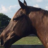 Horse Song Equine Bodywork & Reiki