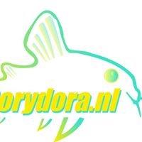 Corydora
