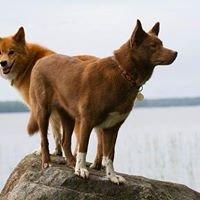 Koira- ja Kissahoitola Tassula, Koulutuskeskus Salpaus