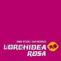 L'Orchidea Rosa