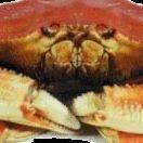 Fresh Oregon Crab