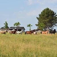 Pension de chevaux  La Plagne