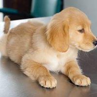 Clínica Veterinaria Healthy Pet - Ambato