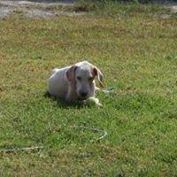 Rhodes to UK Animal Adoption Service