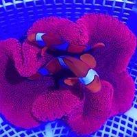 Tropical Aquarium Services