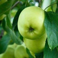 La poma escollida