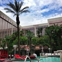 Pool Side Flamingo Las Vegas