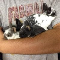Acme Ridge Rabbity & Hobby Farm