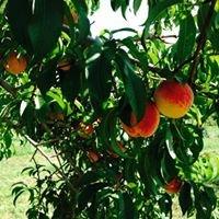 Starberry Peach Farm