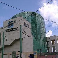 Scales and Ales Aquarium of America