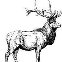 Patchogue Elks Lodge # 1323