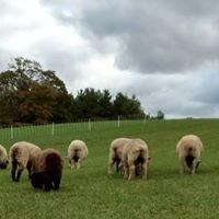The Woolroom at Longmeadow Farm