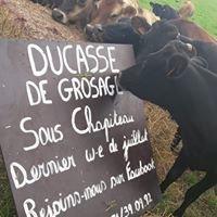 Ducasse de Grosage