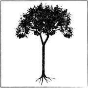 Affordable Trees, LLC.