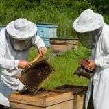 Bee Rescue Arcadia 818 919 4696 Open 24/7 Same Day Service