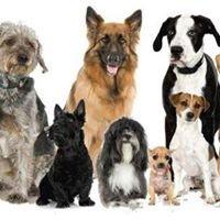 Space Pet Care - Pet Grooming, Pet Minding, Pet Sitting and Pet Walking