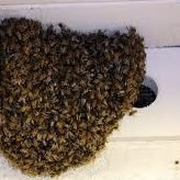 How To Get Rid of Bees & Wasp Altadena Free Estimates 818 919 4696