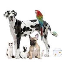Kb Animal Healing