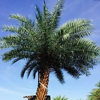 Palm Gardens Nursery & Landscaping
