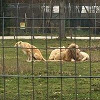 Le Parc Des Felins Nesles Seine Et Marne