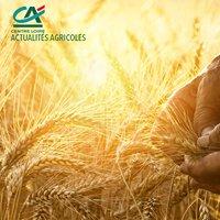 Actualités Agricoles Centre Loire