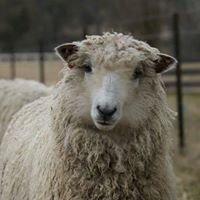 Sisters in Sheep