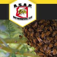 ASAP Bee Removal, LLC