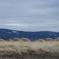 W2 Sheep Company