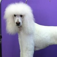 Dazzling Dog Grooming