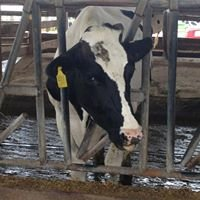 Kelsay Dairy Farm