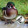 Livingston Ripley Waterfowl Conservancy