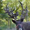 Double R Reindeer Ranch
