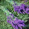 The Lavender Patch Farm