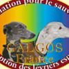 Association Galgos France (Page Officielle)