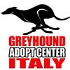 GACI Greyhound Adopt Center Italy - adozioni levrieri -