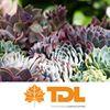 Tim Davies Landscaping