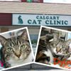 Calgary Cat Clinic